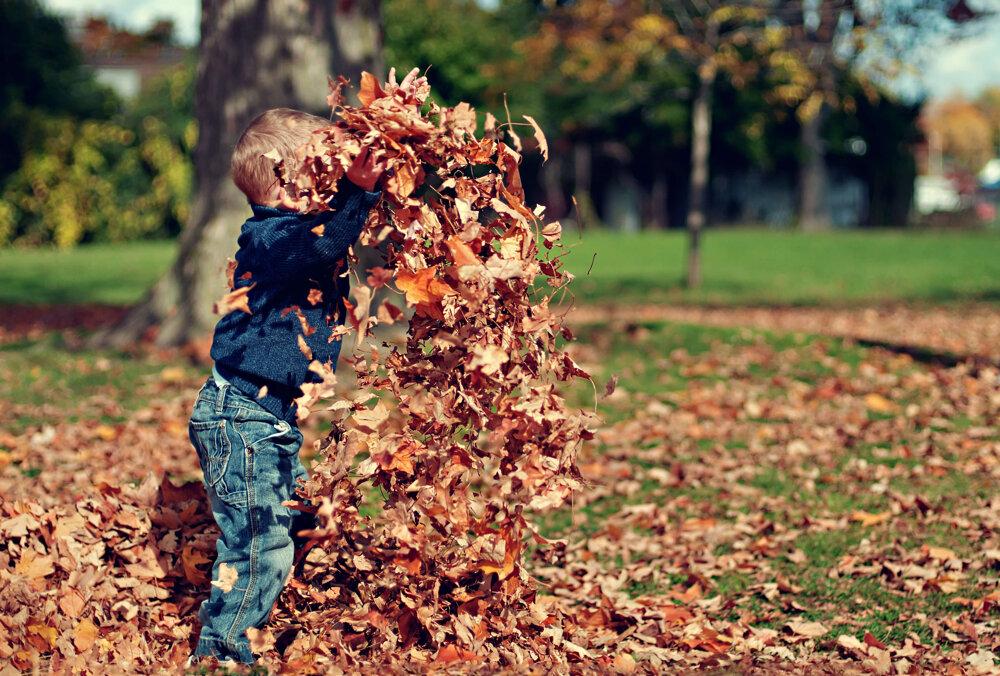 Осенний салют из листьев